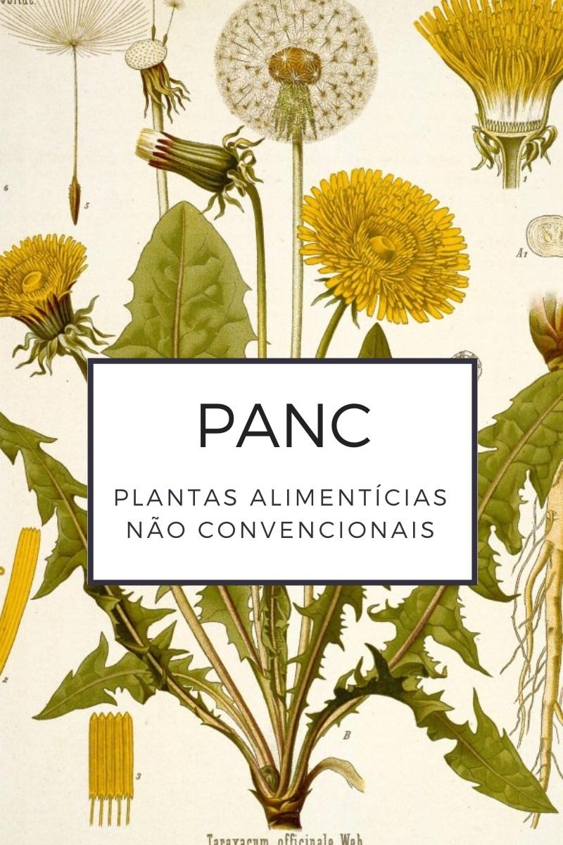 O que é uma PANC ou Planta Alimentícia Não Convencional?