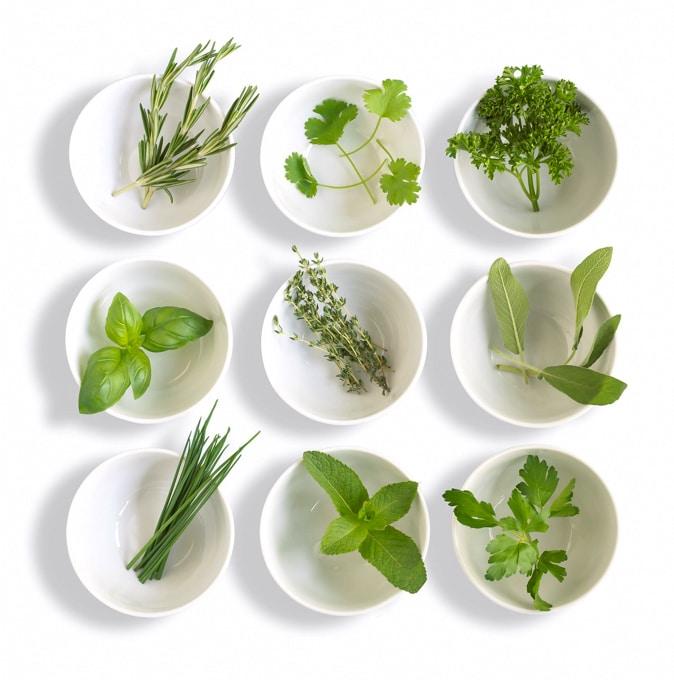 Ervas frescas – Dicas para usar