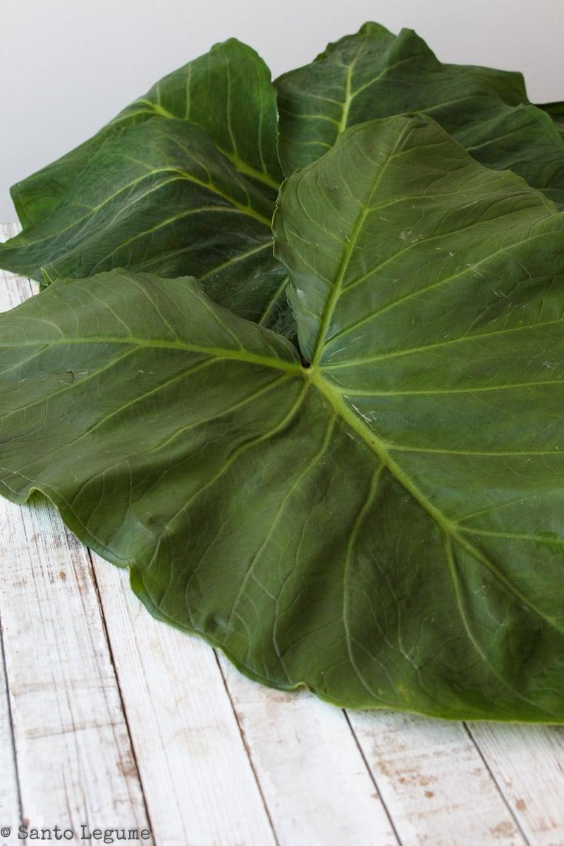 Folhas de taioba